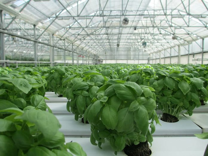 Hogyan válasszunk egészséges növényeket az óvodában